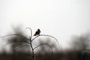 Birdie by dorukkirezci