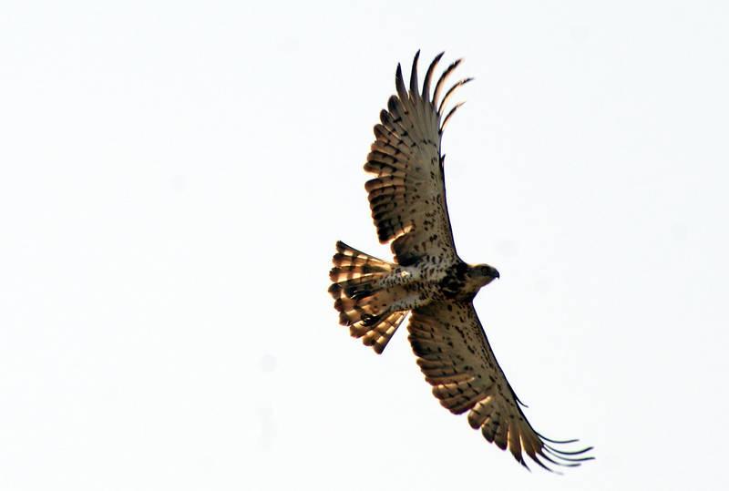 Open your wings by dorukkirezci