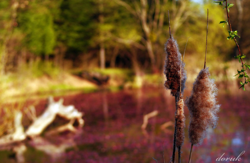 Purple Haze by dorukkirezci