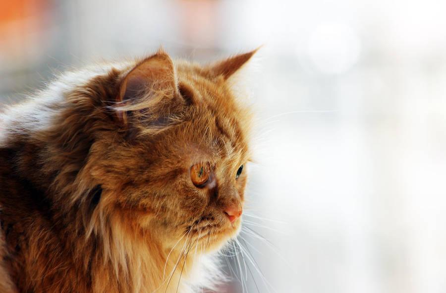Looking to street cats by dorukkirezci
