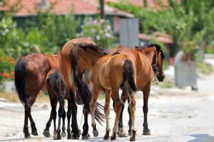 Gang of Horses by dorukkirezci