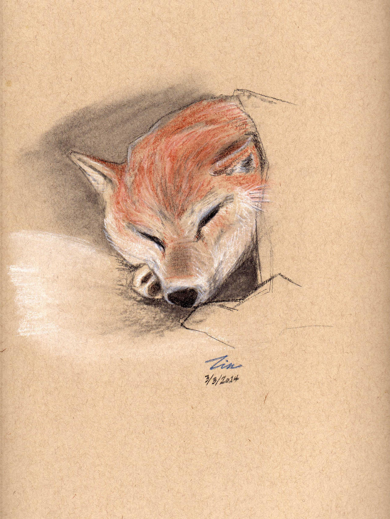 Shiba Inu Study by Ranfield