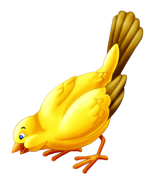 Canario by SeishinKonno