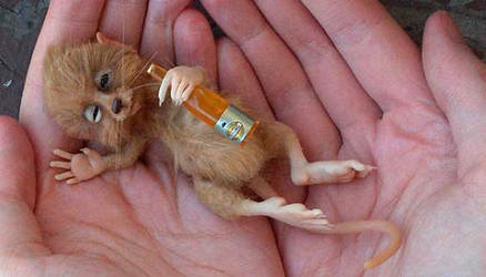Drunk mouse