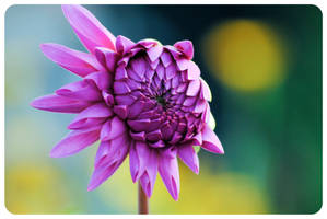flower++ by Gamegear04