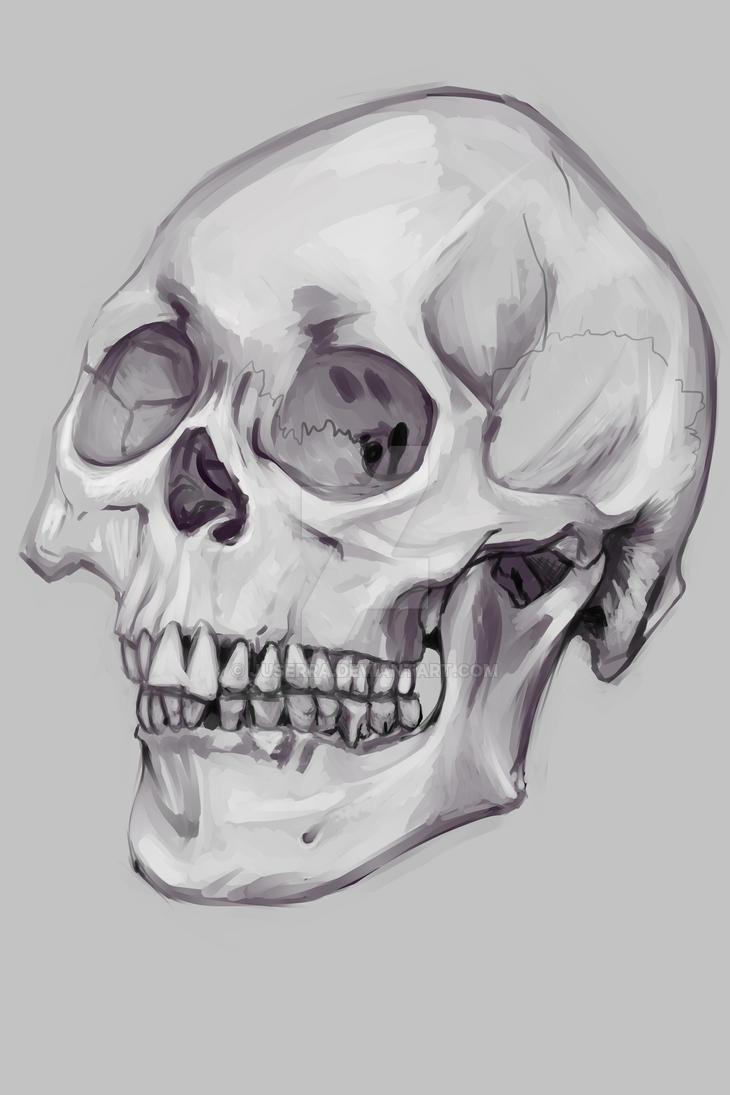 skull by juserra