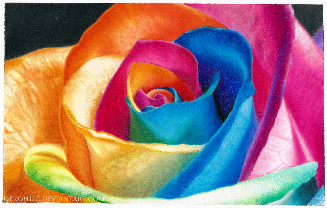 Rainbow Rose (color pencil) by DFrohlic on DeviantArt
