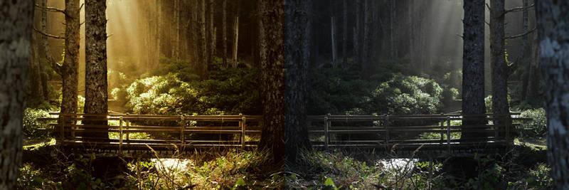 The Greener Side: Revealed