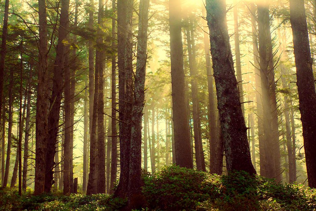 forestsunset video