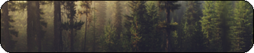 Morning Forest F2U by dragesvart