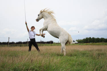 Silke rearing horse by Visibre