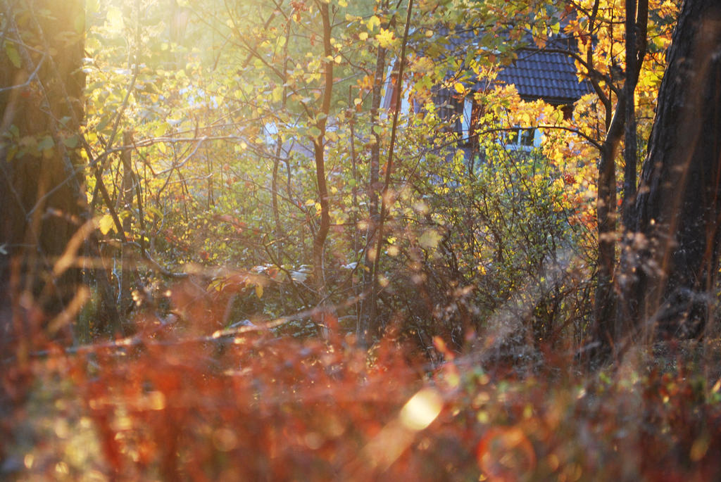 Forrest1 by jego0320