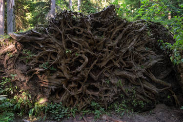 Rooting Problems by eegariM