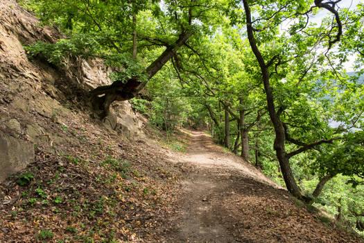 Gnarled Oak Trail