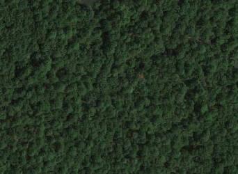 tree texture by willartmaster