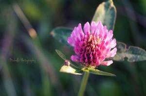 Beautiful flower by MichisArt