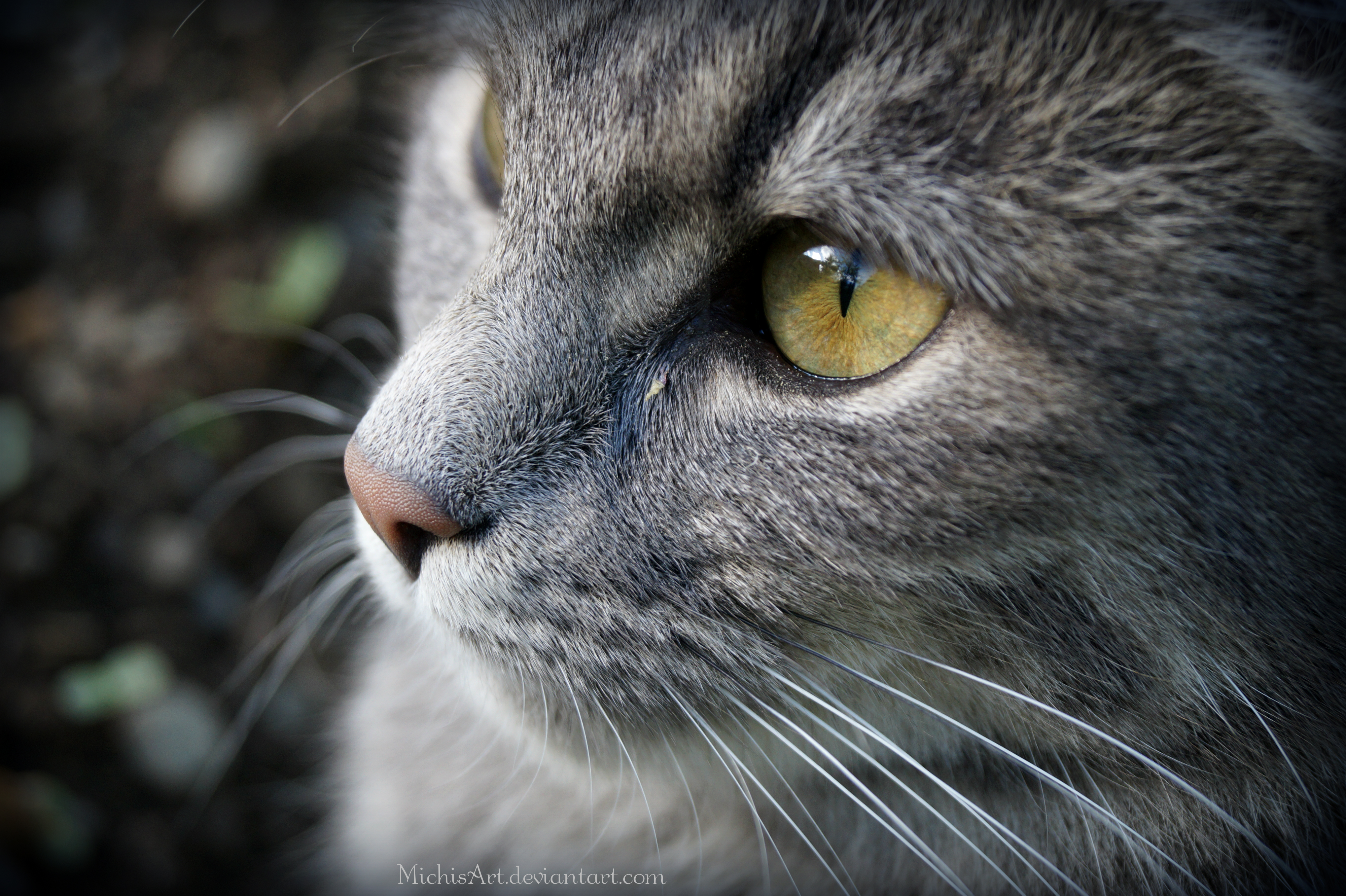 En Sevimli Kedili Duvar Ka��tlar� Sevimli Kediler Arkaplan Kedi Resimleri Masa�st� Sevimli Kedi Resimleri