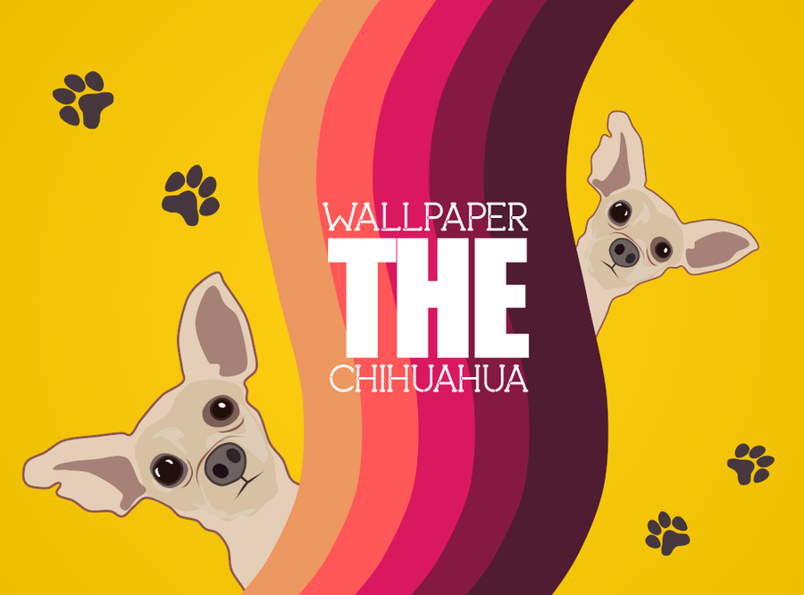 The chihuahua wallpaper by rasulh on deviantart the chihuahua wallpaper by rasulh voltagebd Images
