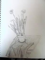 Still life drawing by Noevember