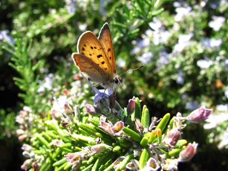 Butterfly 0884