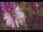 Pretty in Purple II by wave-e