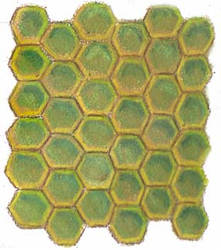 Honeycomb sample by Eliza-the-artist