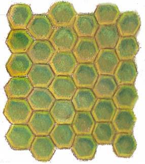 Honeycomb sample
