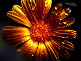 Golden flower by kouki1