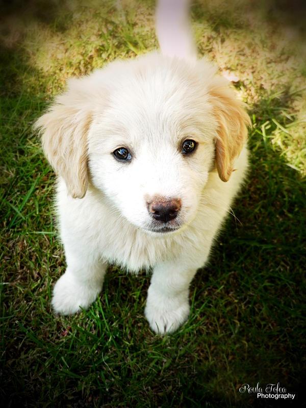 My lovely puppy by kouki1