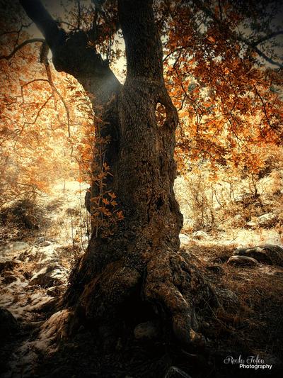 Tree of life by kouki1