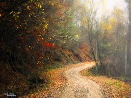 Autumn Colors by kouki1