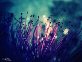 Make a wish by kouki1