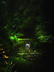 The Swan lake by kouki1