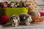 new hedgehogs