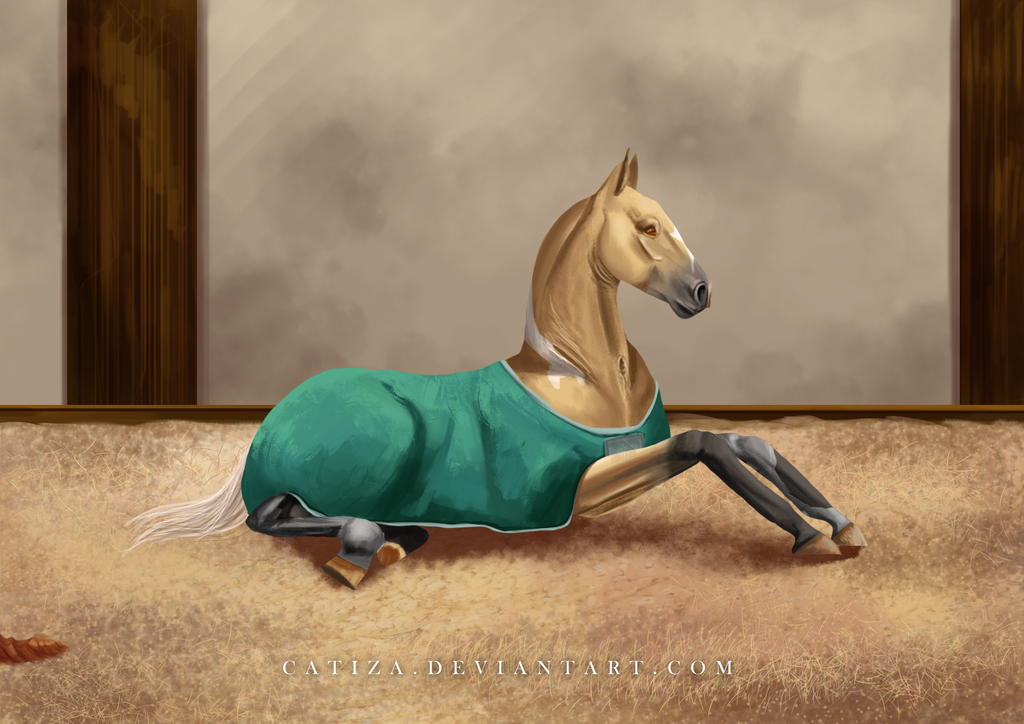 EquiBreak: A warm blanket by Catiza