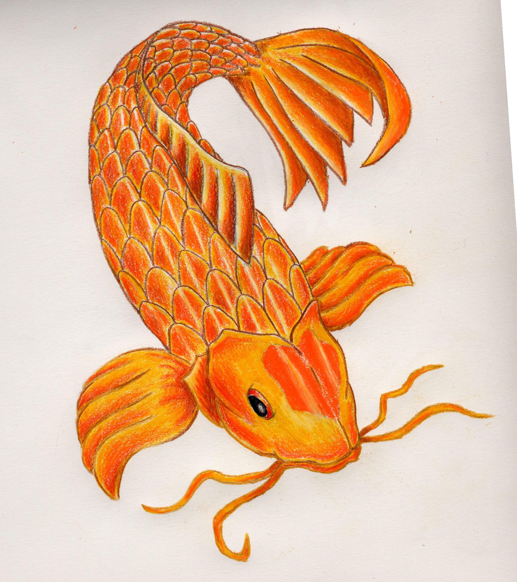Koi fish 1 by soletthemstare on deviantart for Koi fish size