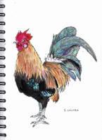 Inktober 05 Chicken (scan) by FourWaterReed