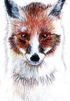Dream Fox by dingo-murci