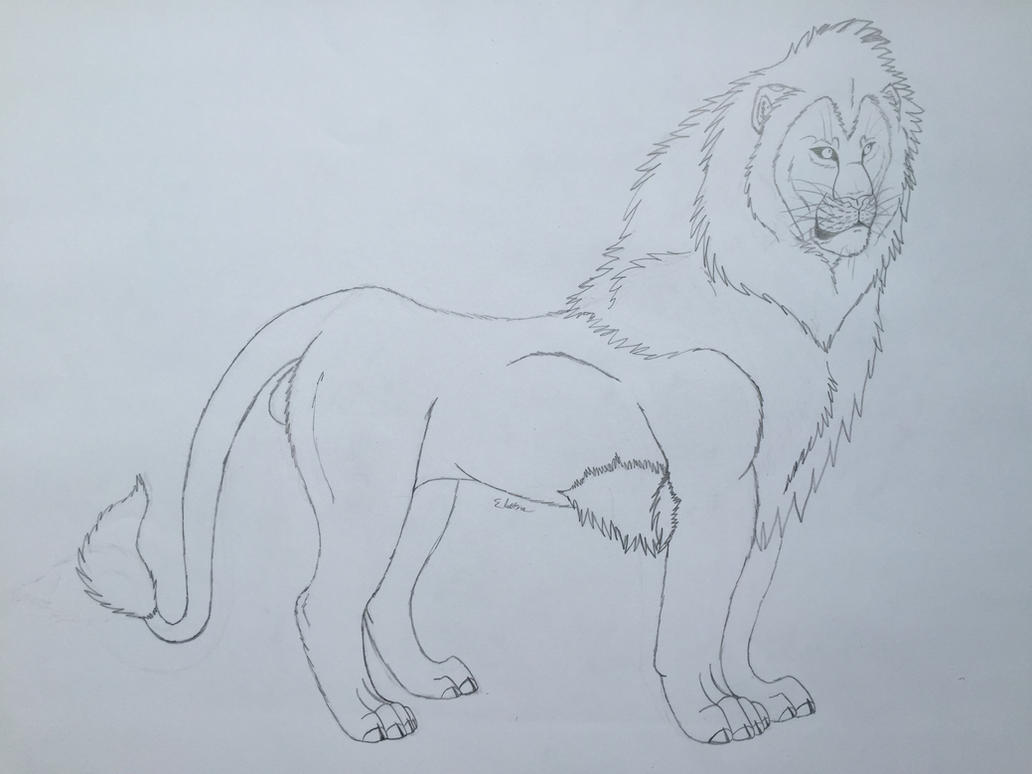 Male Lion Sketch By Electra16 On DeviantArt