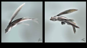 Flyingfishes by coisital