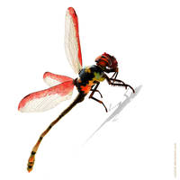 Dragonfly by coisital