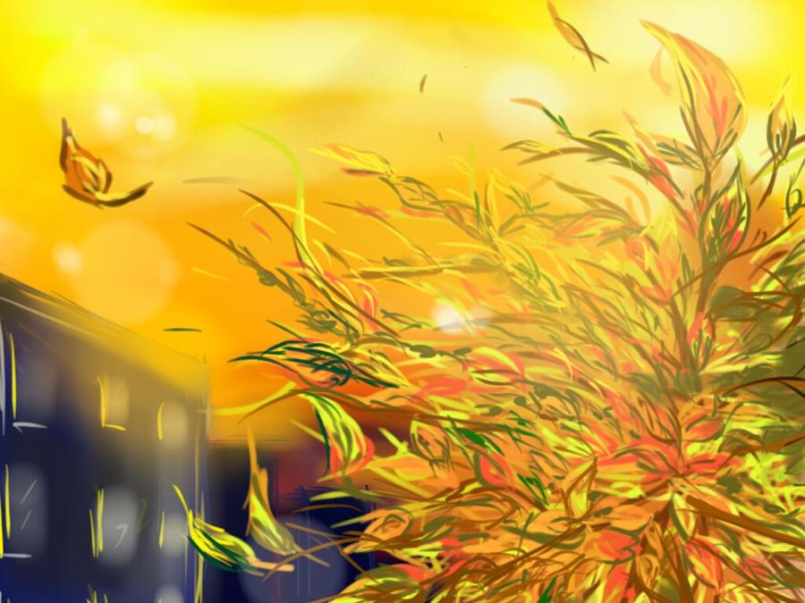 Catching autumn fire by sineddine
