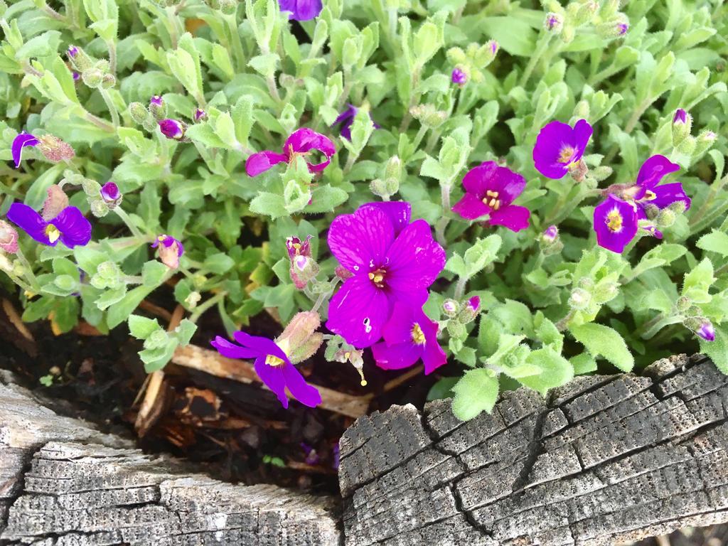 Small Pinkpurple Flowers By Skyleaf12 On Deviantart
