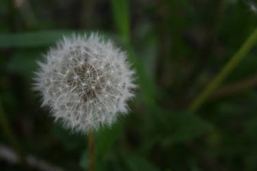 To Wish on a Weed