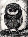 Cute But Deadly Owl - Pencil Drawing