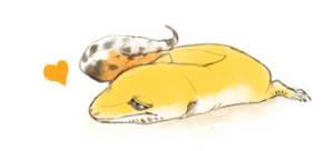 Leopard gecko love