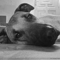 Noisy Dog Day