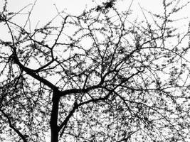 Fractal Nature