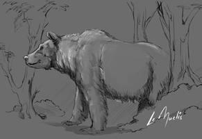 Skt Bear