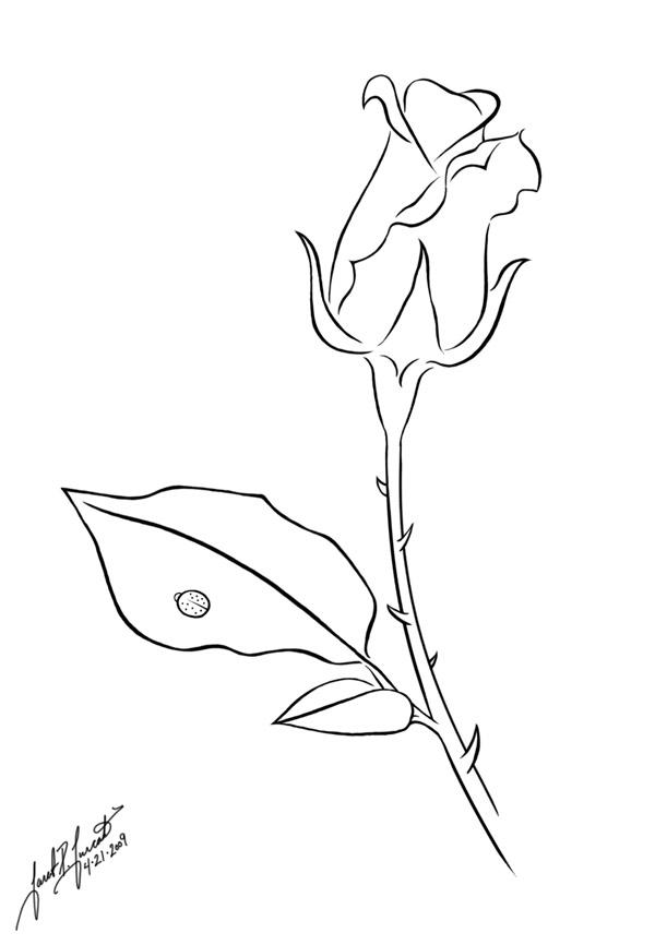 Line Art Of Rose : Rose line art by pulsedragon on deviantart